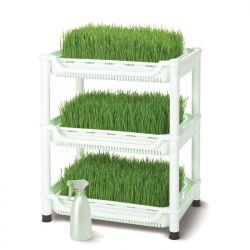 Carro de germinación de hierba de trigo - Sproutman