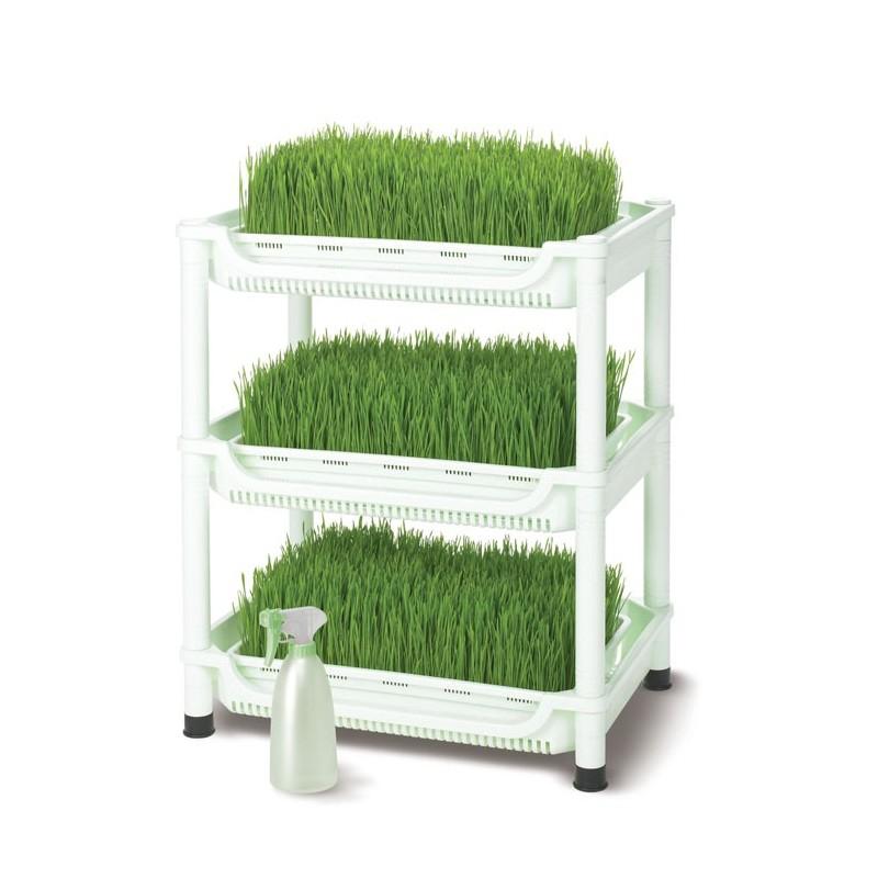 Carro germinador para hierba de trigo - Sproutman