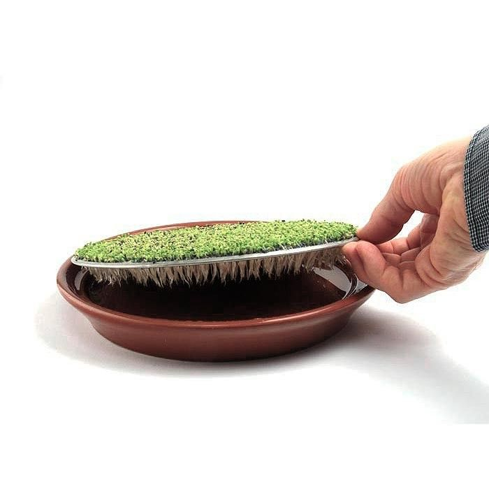 Germinador de plato, especial para semillas mucilaginosas