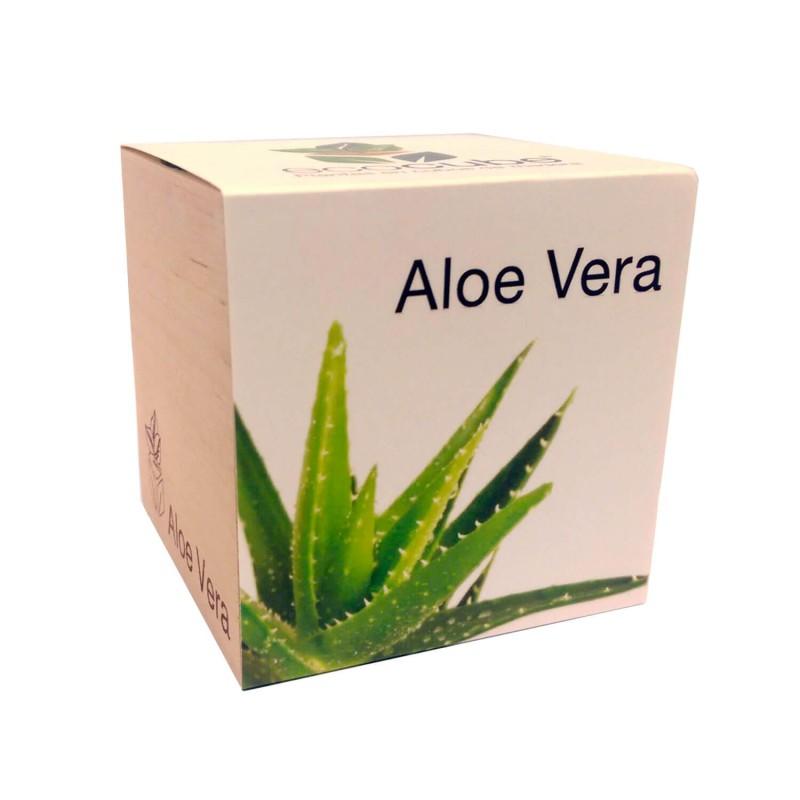Ecocube de Aloe Vera