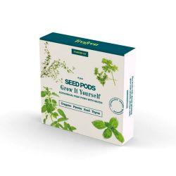 Kit 4 plantas aromáticas
