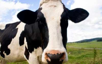 Reacción inmune a la leche