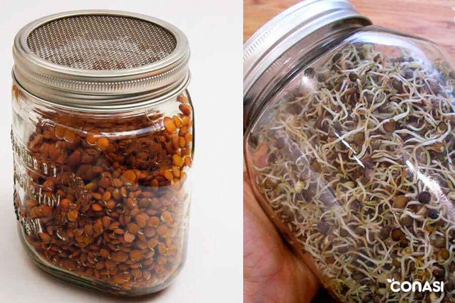 Lentejas germinadas en tarro de cristal - Errores comunes al germinar