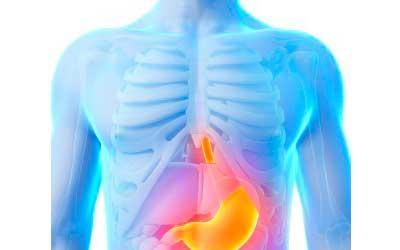 antinutrientes-cuerpo