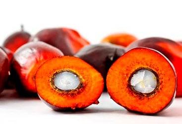fruto-aceite-de-palma