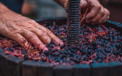 Qué es un vino natural. Tipos de vinos