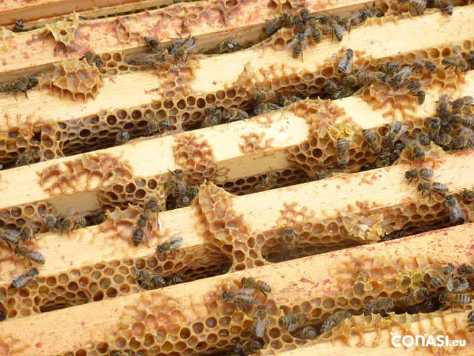 ¿Por qué es tan importante que salvemos a las abejas?