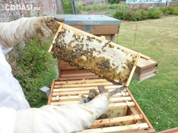 El apicultor es el responsable de extraer la miel a las abejas