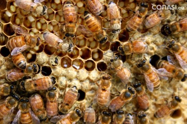 Los productos obtenidos a partir de las abejas, y sus usos medicinales