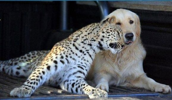Perro y leopardo ¡tan amigos!