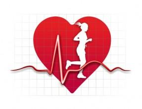 Cómo trabaja el sistema cardiovascular mientras realizamos una actividad física