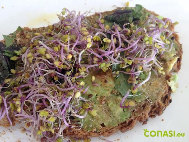 Un ejemplo de desayuno SEN: tostadas con germinados