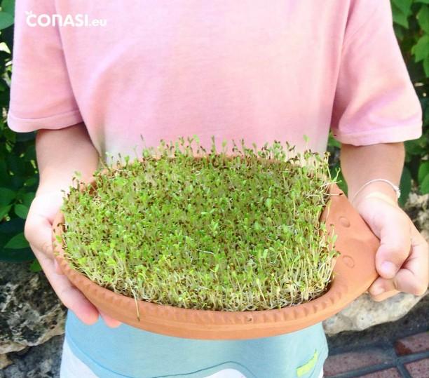 Germinador de erizo, de barro para germinar semillas mucilaginosas