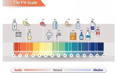Los alimentos no acidifican el pH de la sangre