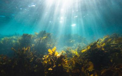 ¿Qué son las algas?