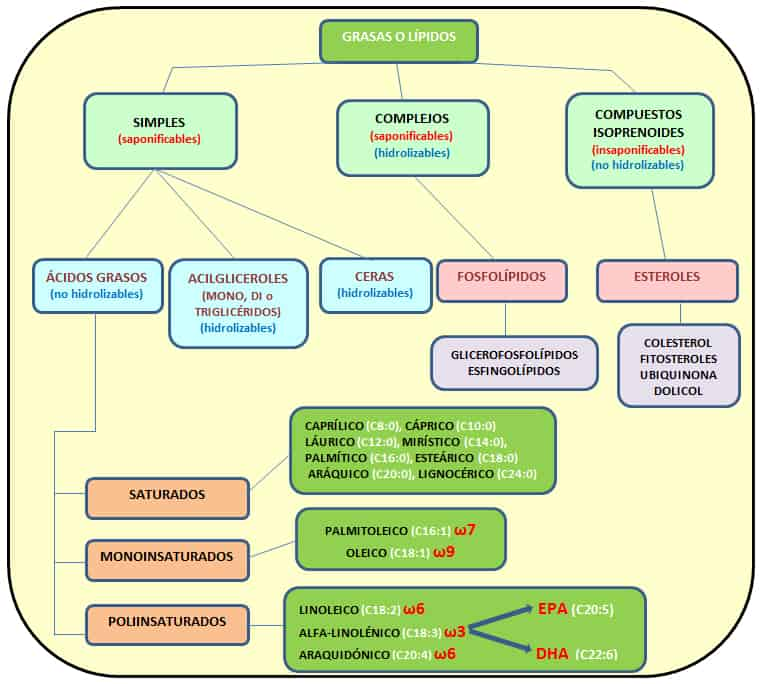 esquema-clasificacion-tipos-grasas