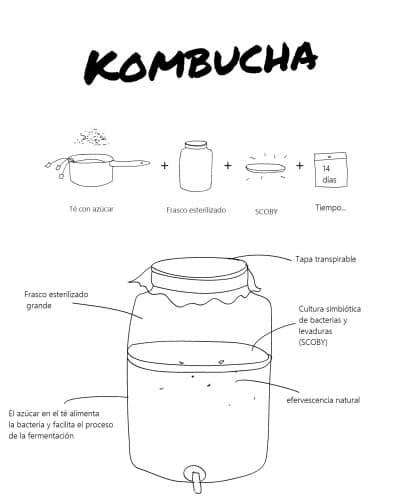 proceso-elaboracion-te-kombucha