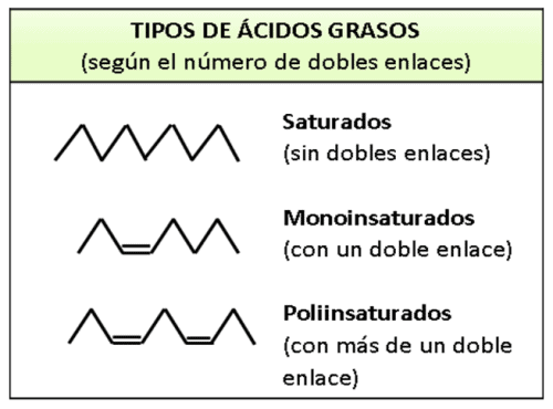 tabla-resumen-tipos-acidos-grasos