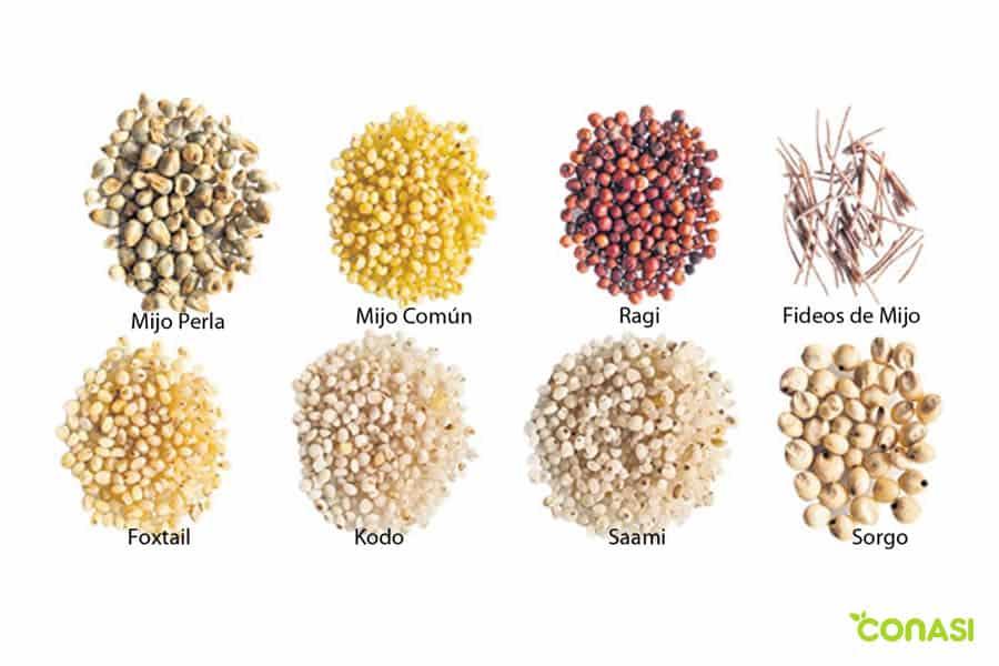 tipos y variedades de mijo