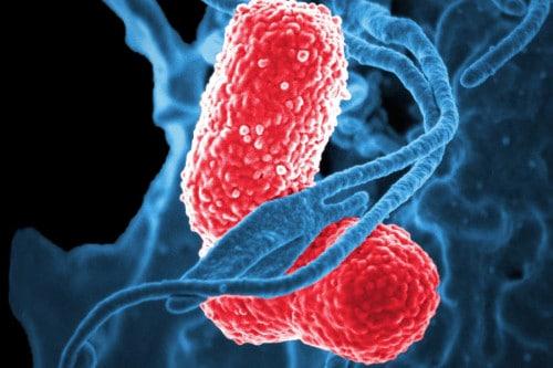 Génesis Probióticos naturales