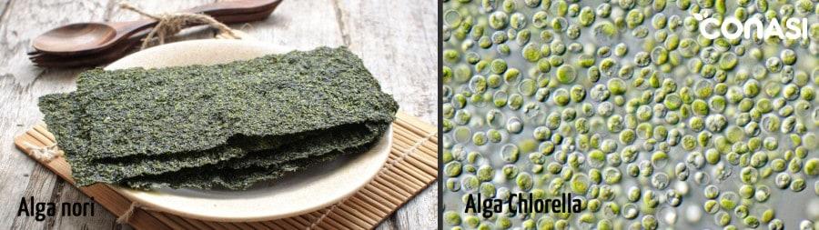 Algas nori y chlorella