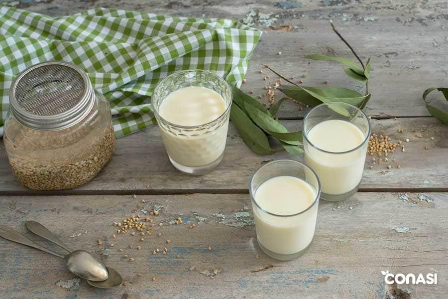 Tres vasos con leche de trigo sarraceno junto a un tarro germinador con trigo sarraceno sobre una mesa.