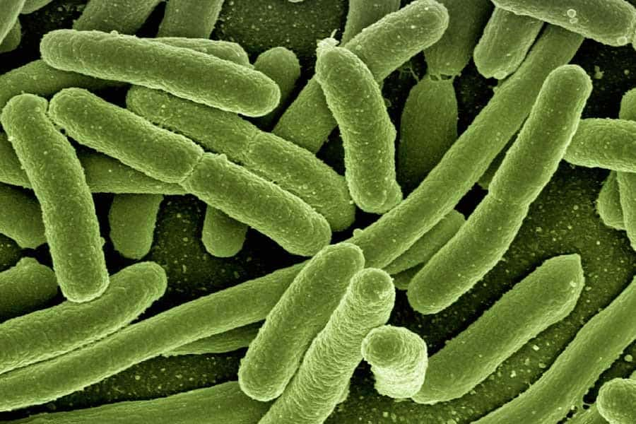 Bacterias de E.Coli - Disbiosis intestinal