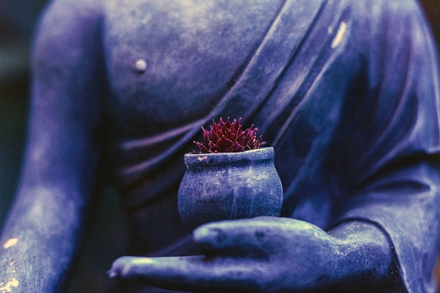 Budha sosteniendo una planta - Ayurveda