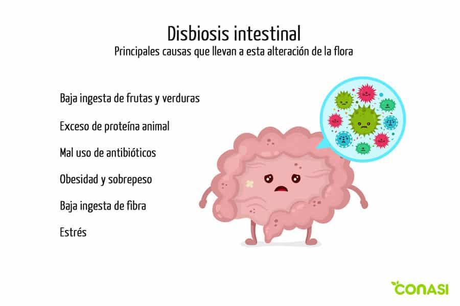 dibujo de un intestino con disbiosis intestinal