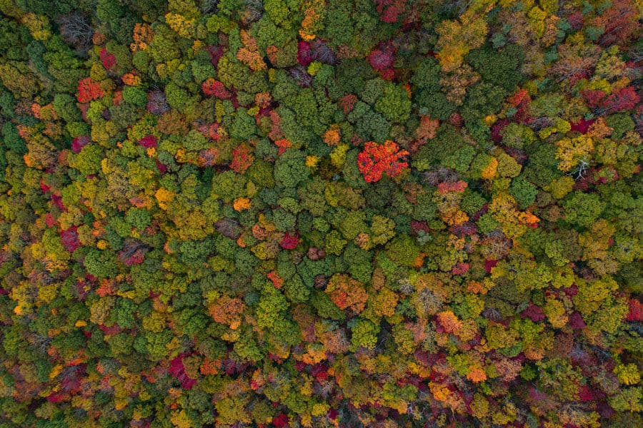 Bosque visto desde arriba - Fermentación casera
