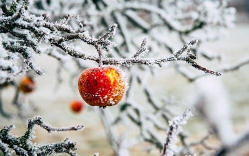 Conasi-Consejo: Alimentación en invierno