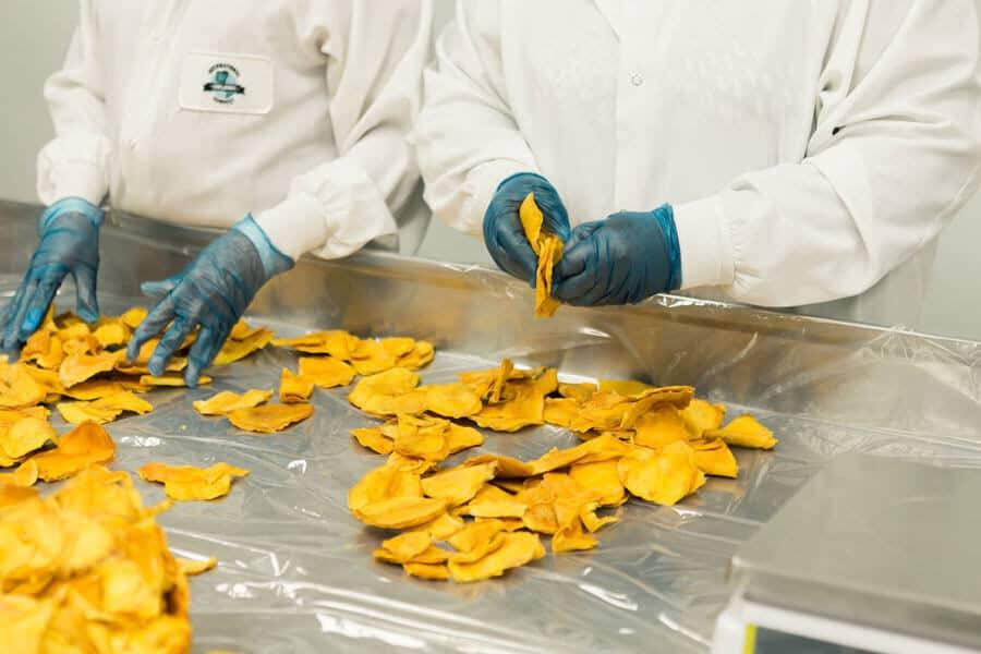 Mango deshidratado manipulándose en una industria - Frutas deshidratadas