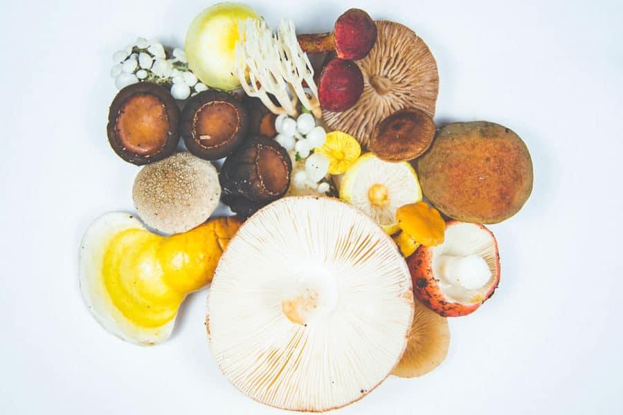 Diferentes tipos de setas comestibles