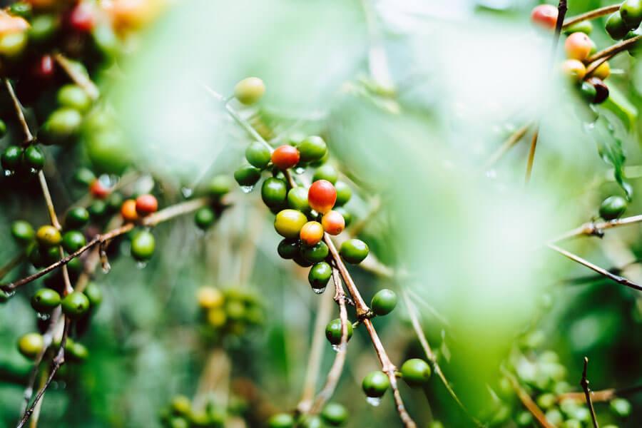 café y salud: aprende sus beneficios