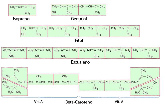 Ejemplo terpenos: geraniol, fitol, vitamina A