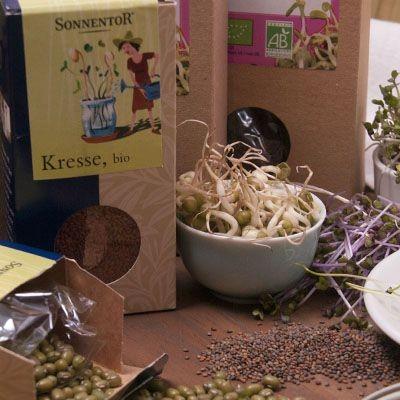Semillas para germinar ecológicas