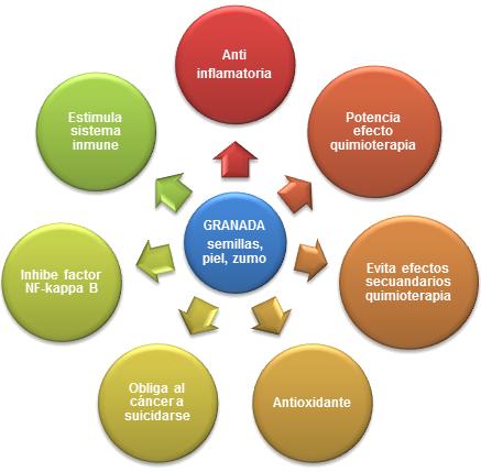 Representación de los efectos beneficiosos de la granada